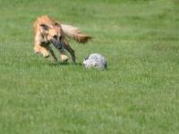 Yano und der Ball