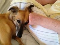 Tiergestützte Therapie mit Aglaia
