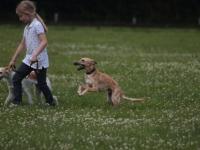 Louisa die Hundekennerin