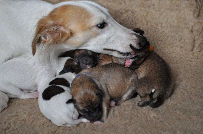 Fee eine geborene junge Schwanenmutter