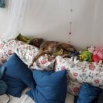 Pepino bei der Arbeit im Kinderheim ( Im Traum)